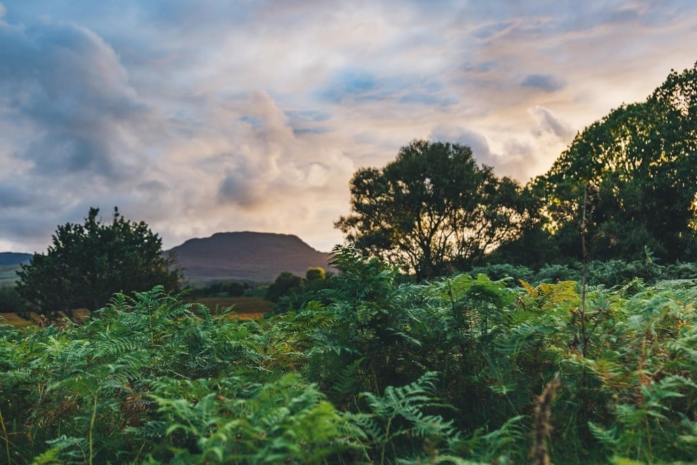 golden hour through ferns