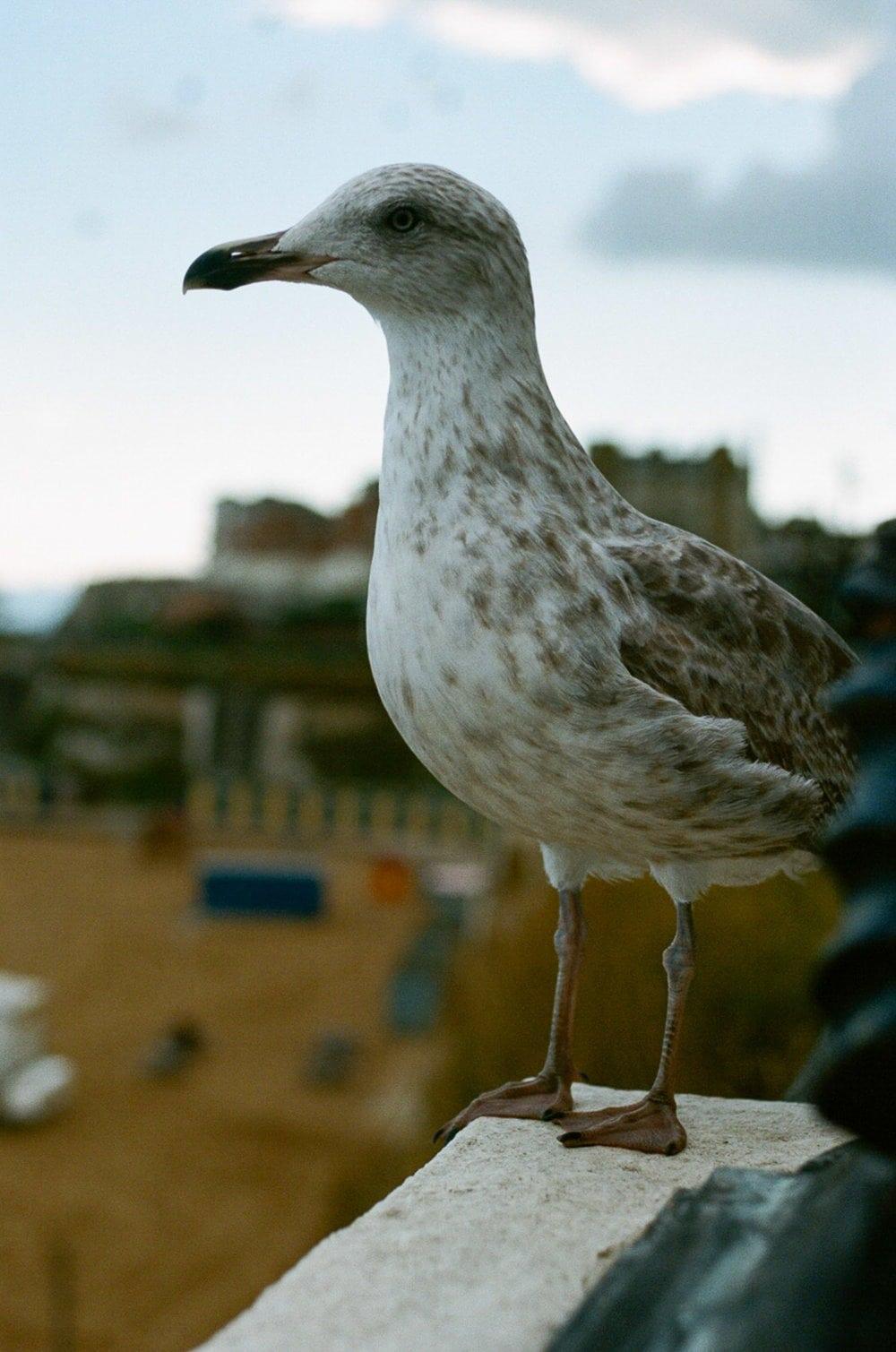 seagull broadstairs uk nikon fm2
