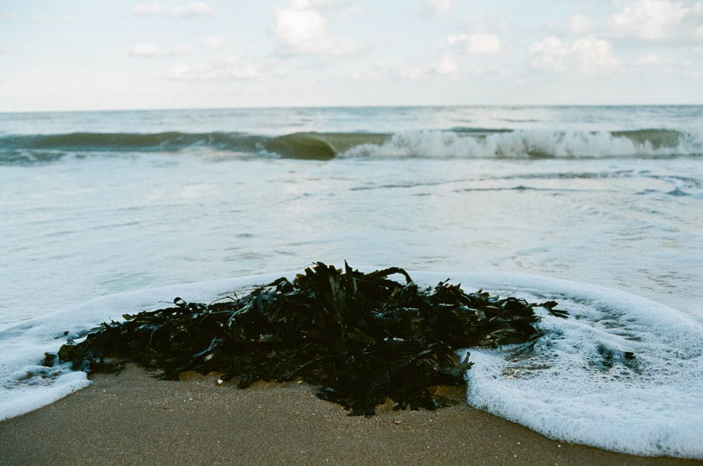see crashes onto seaweed with Nikon FM2