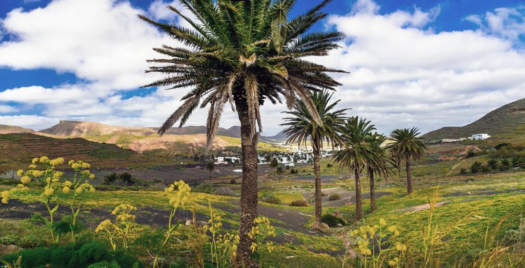 tropical island lanzarote